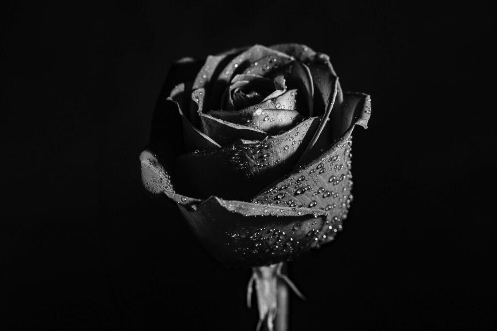 ดอกไม้สีดำ