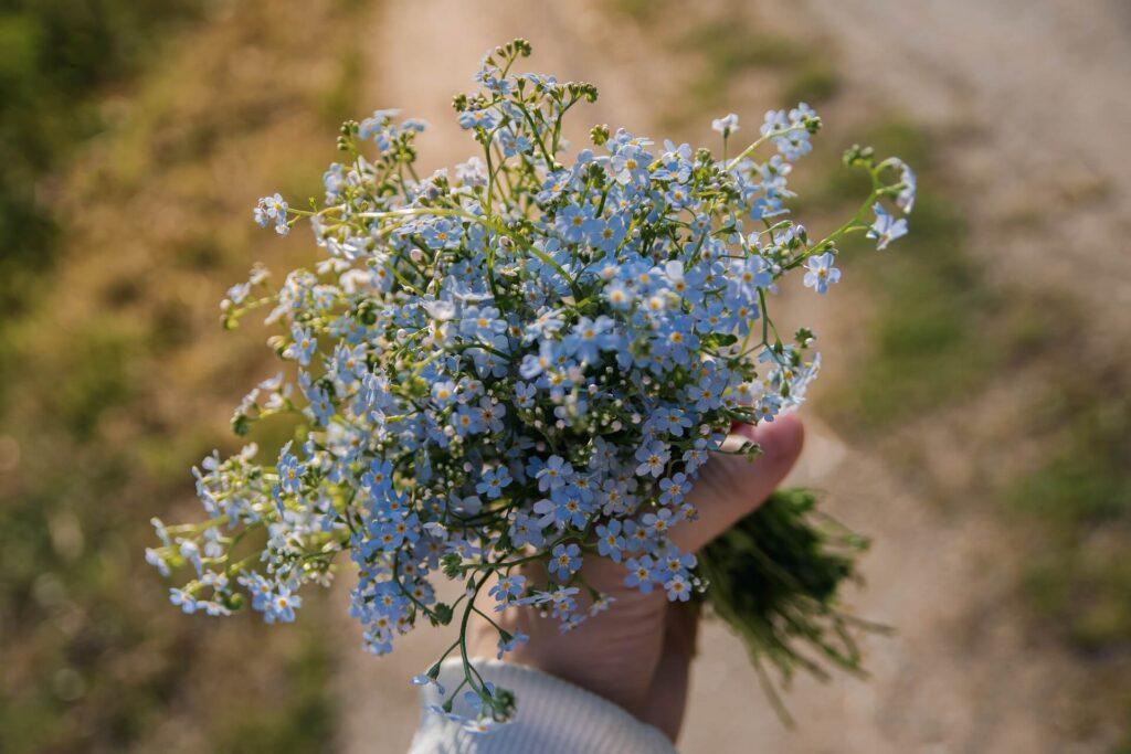 ดอกไม้ให้แฟน ฟอร์เก็ตมีน็อต