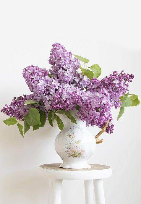 ดอกไม้มงคล ตามหลักฮวงจุ้ย ไลแลค