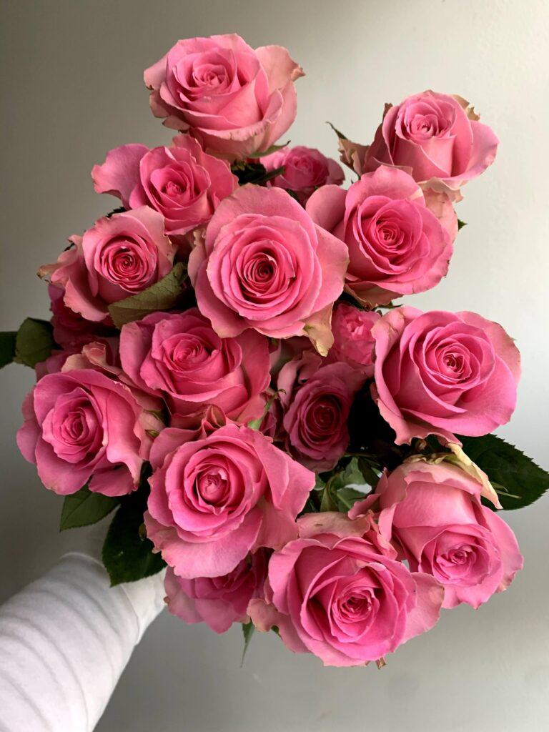 ดอกไม้สีชมพู กุหลาบ