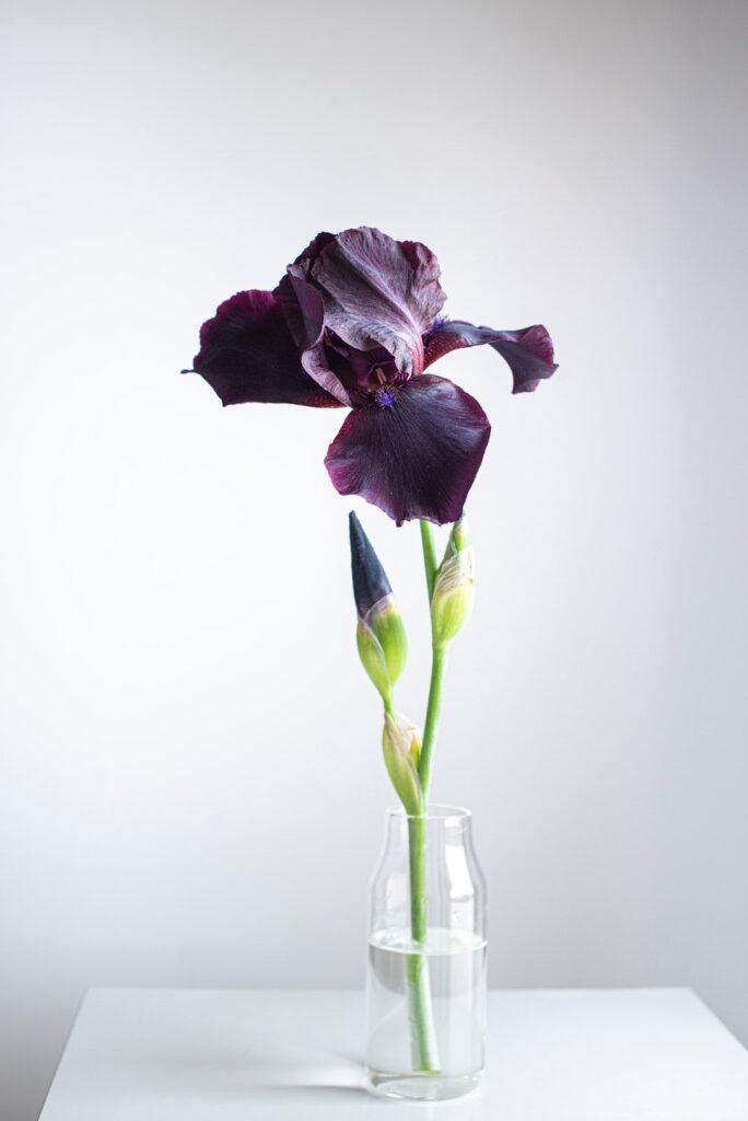 ดอกไม้ให้ผู้ใหญ่ ไอริส