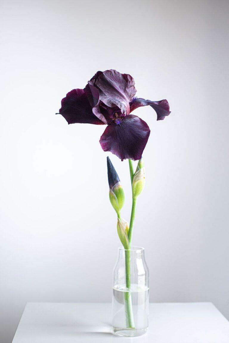 รวม 5 ดอกไม้ให้ผู้ใหญ่ ถูกใจทั้งผู้ให้และผู้รับ