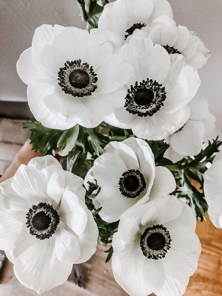 ดอกไม้วันฮาโลวีน อะเนโมเน่สีขาวดำ