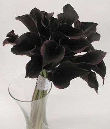 ดอกไม้วันฮาโลวีน คาลล่าลิลลี่ สีดำ